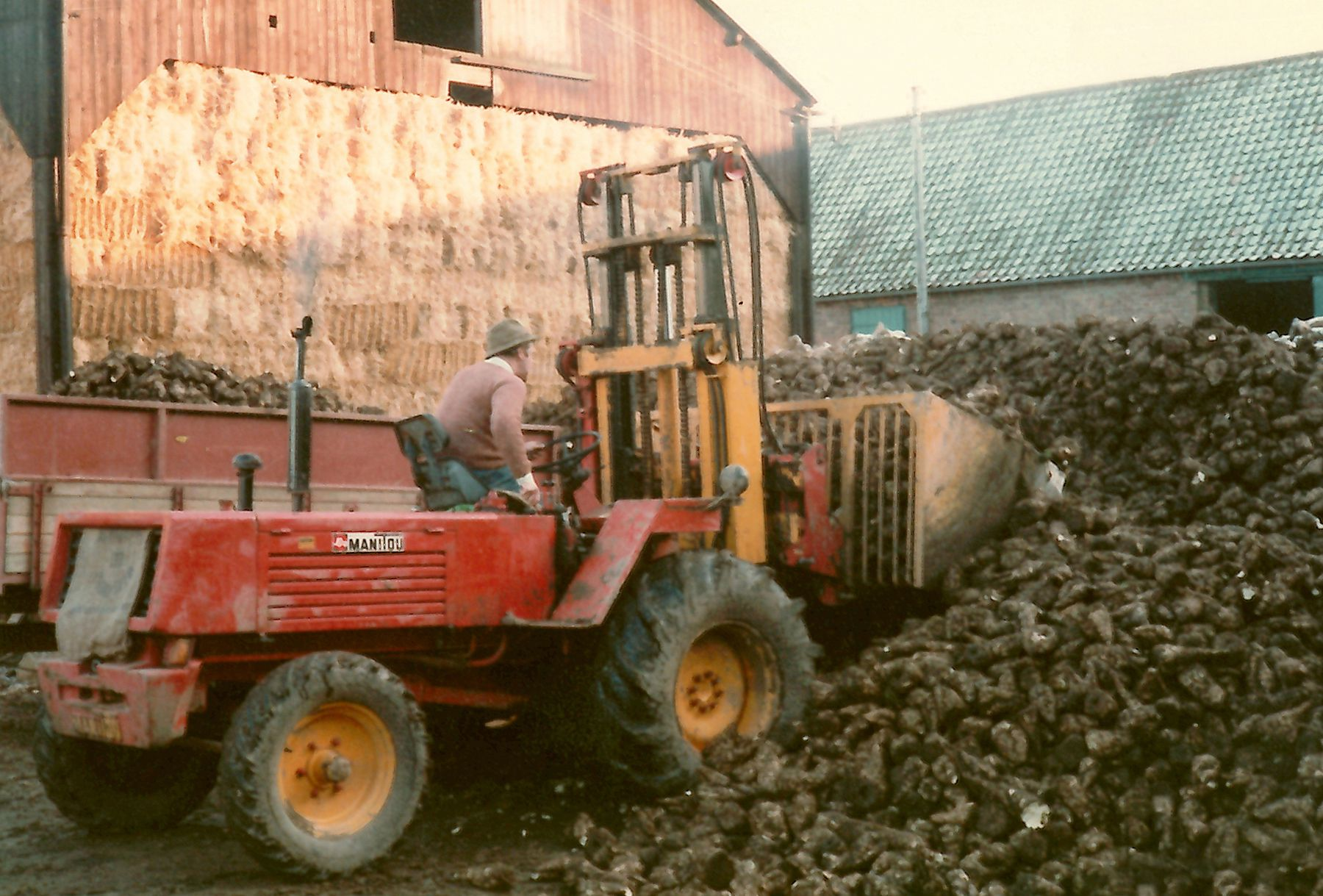 Bob Howard loading sugar beet at Little Morton - c.1982